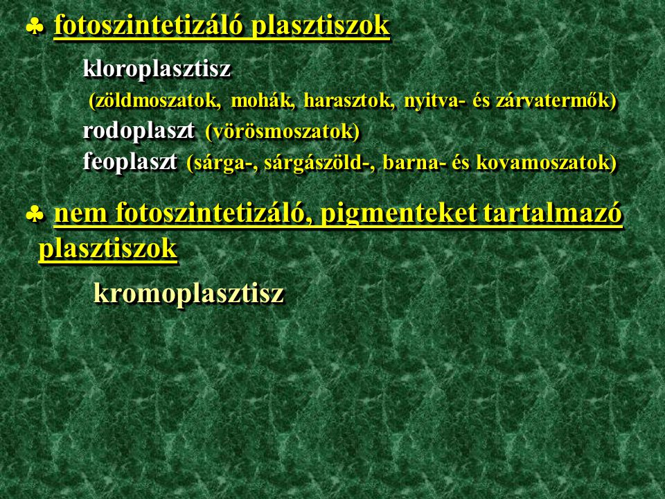 Sinapis alba –fehér mustár (Brassicaceae)