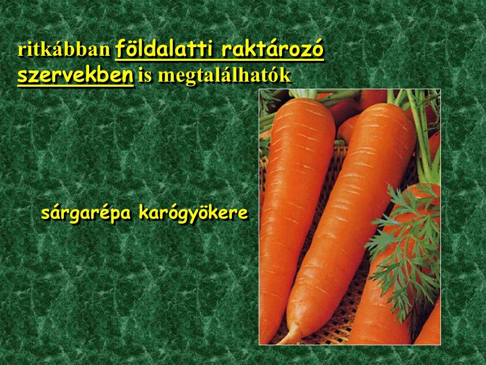 ritkábban földalatti raktározó szervekben is megtalálhatók sárgarépa karógyökere sárgarépa karógyökere ritkábban földalatti raktározó szervekben is megtalálhatók sárgarépa karógyökere sárgarépa karógyökere