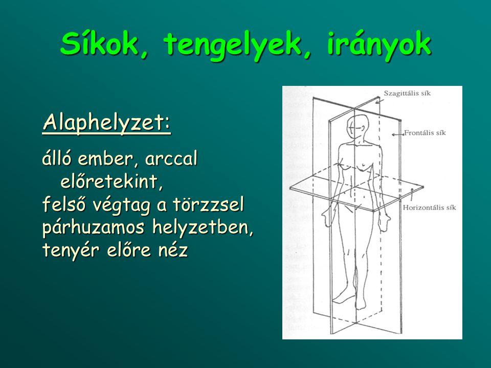 légtartó, pneumatikus csontok (os ethmoidale/rostacsont)