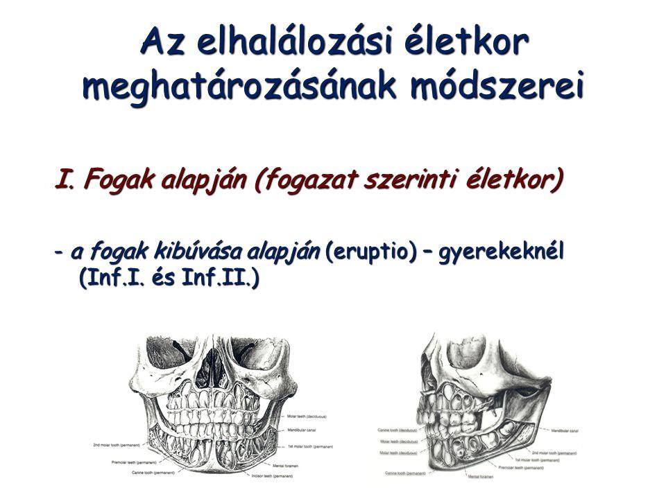 Az elhalálozási életkor meghatározásának módszerei I. Fogak alapján (fogazat szerinti életkor) - a fogak kibúvása alapján (eruptio) – gyerekeknél (Inf