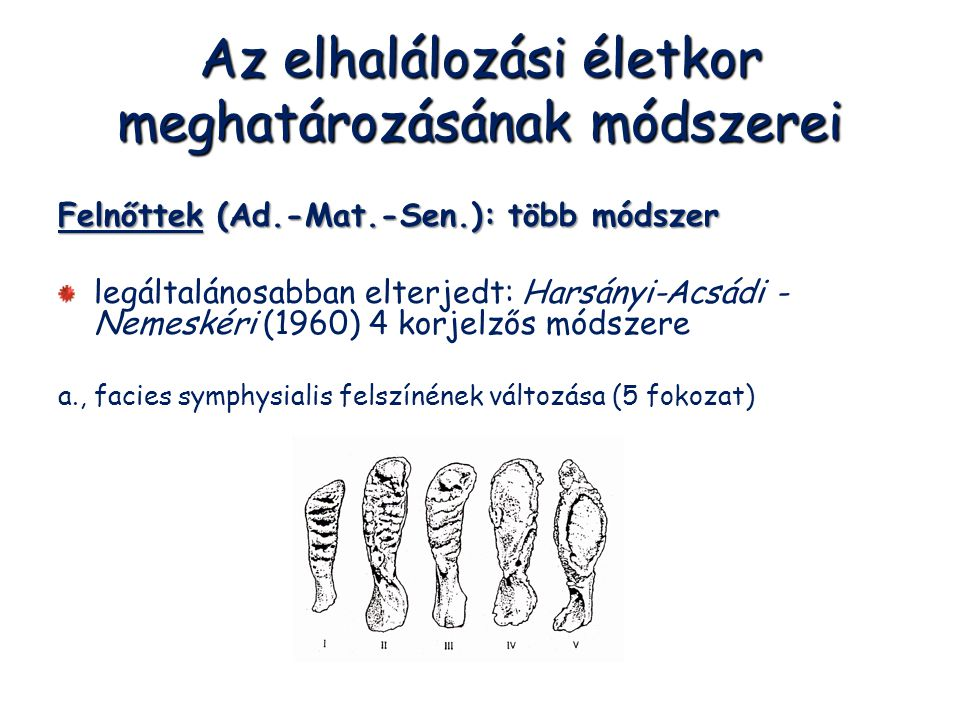 Az elhalálozási életkor meghatározásának módszerei Felnőttek (Ad.-Mat.-Sen.): több módszer legáltalánosabban elterjedt: Harsányi-Acsádi - Nemeskéri (1