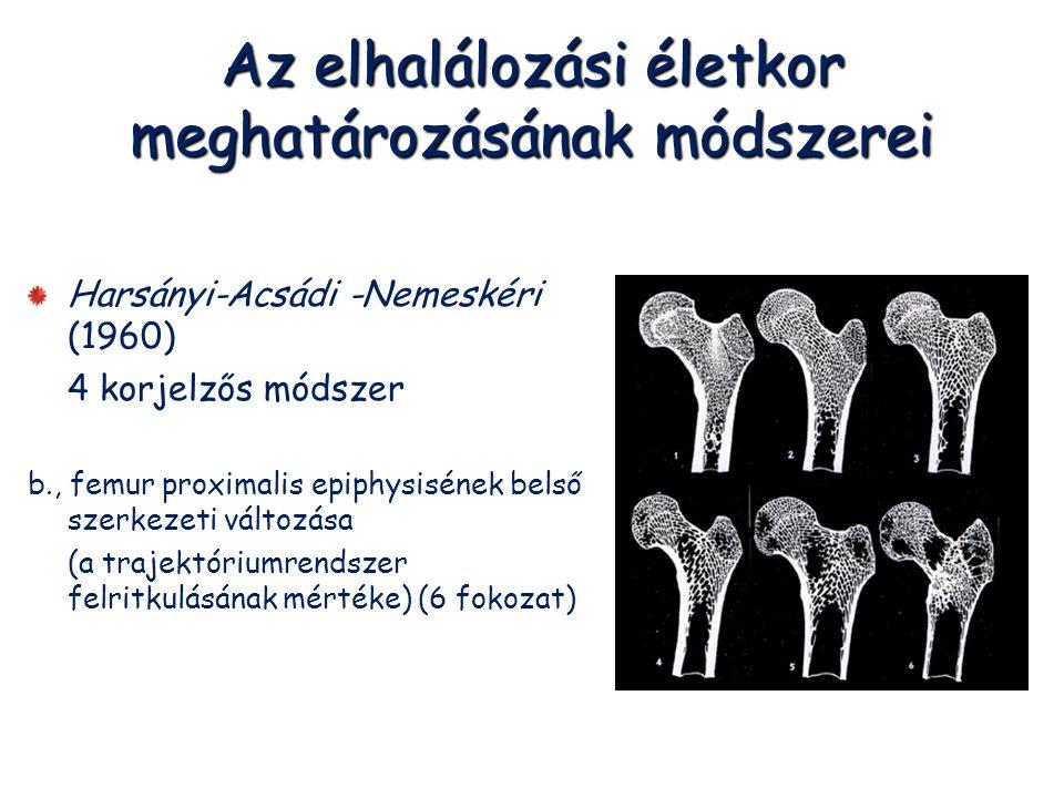 Az elhalálozási életkor meghatározásának módszerei Harsányi-Acsádi -Nemeskéri (1960) 4 korjelzős módszer b., femur proximalis epiphysisének belső szer