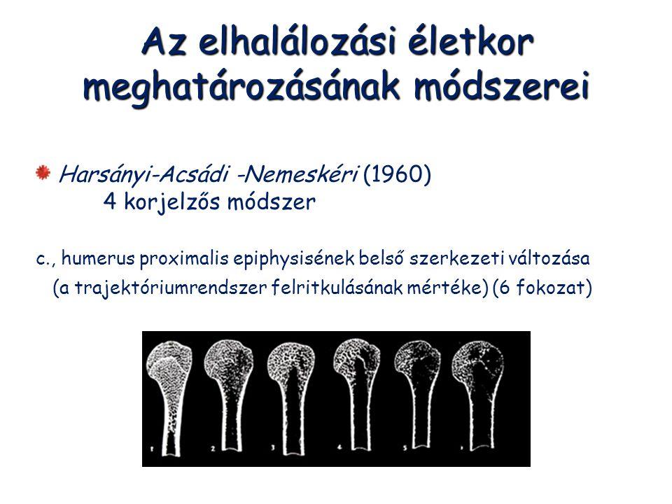 Az elhalálozási életkor meghatározásának módszerei Harsányi-Acsádi -Nemeskéri (1960) 4 korjelzős módszer c., humerus proximalis epiphysisének belső sz