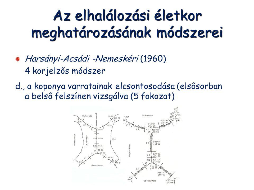 Az elhalálozási életkor meghatározásának módszerei Harsányi-Acsádi -Nemeskéri (1960) 4 korjelzős módszer d., a koponya varratainak elcsontosodása (els