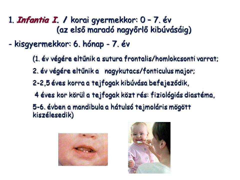 1. Infantia I. / korai gyermekkor: 0 – 7. év (az első maradó nagyőrlő kibúvásáig) - kisgyermekkor: 6. hónap - 7. év (1. év végére eltűnik a sutura fro