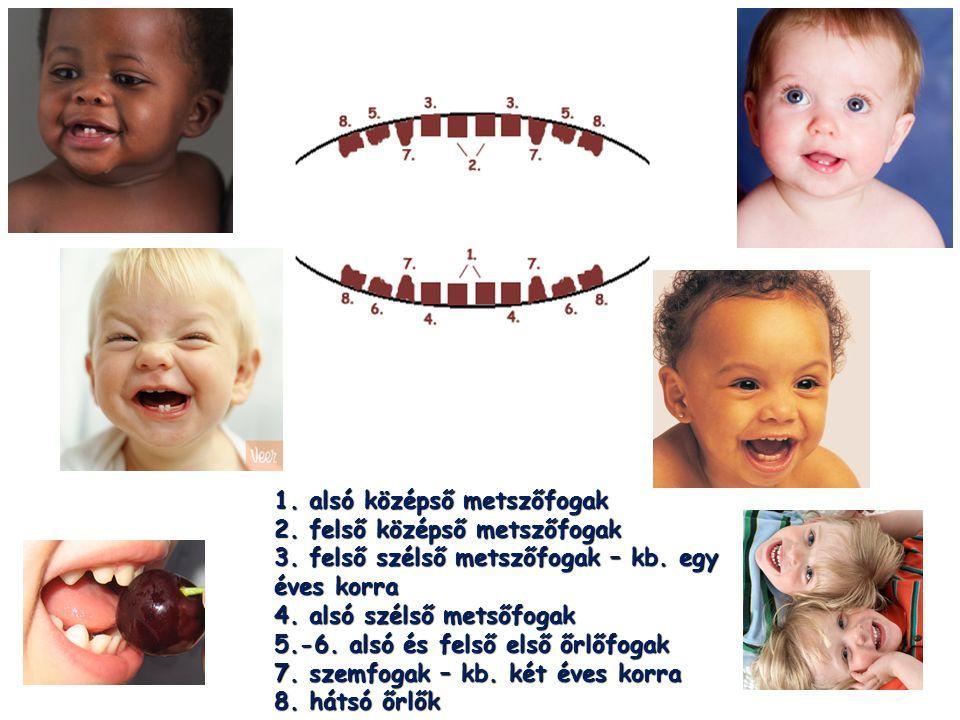 2.Infantia II. / késői gyermekkor: 7 - 14. év (az 1.