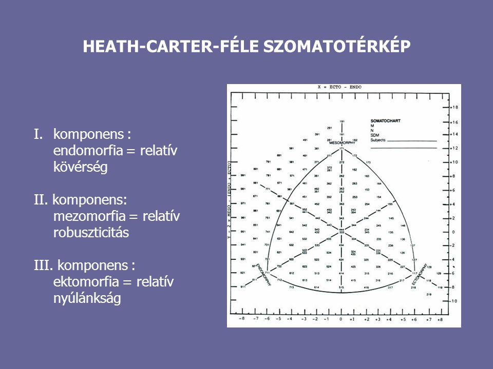HEATH-CARTER-FÉLE SZOMATOTÉRKÉP I.komponens : endomorfia = relatív kövérség II. komponens: mezomorfia = relatív robuszticitás III. komponens : ektomor
