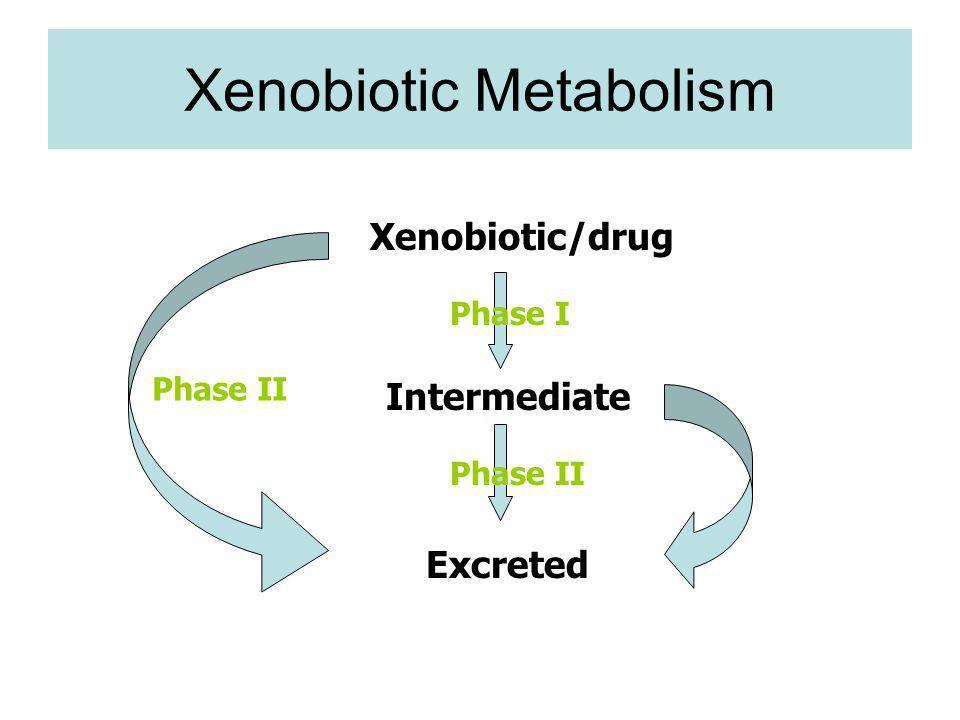 Xenobiotic Metabolism Phase I Phase II Xenobiotic/drug Intermediate Excreted