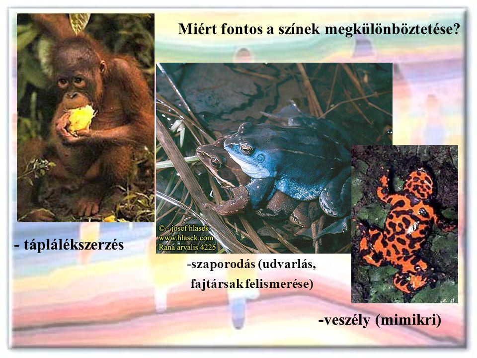 -szaporodás (udvarlás, fajtársak felismerése) Miért fontos a színek megkülönböztetése? - táplálékszerzés -veszély (mimikri)