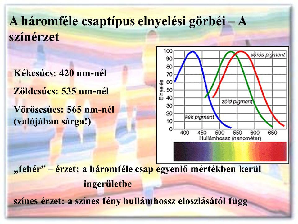 """A háromféle csaptípus elnyelési görbéi – A színérzet Kékcsúcs: 420 nm-nél Zöldcsúcs: 535 nm-nél Vöröscsúcs: 565 nm-nél (valójában sárga!) """"fehér"""" – ér"""