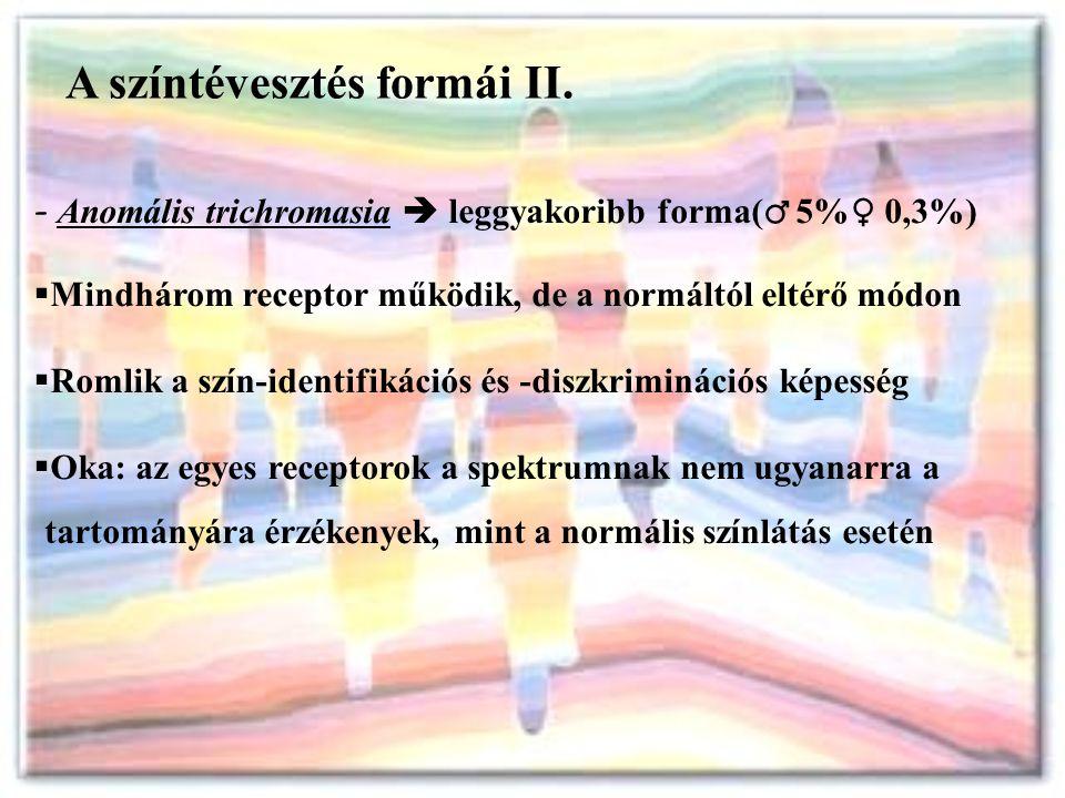 A színtévesztés formái II. - Anomális trichromasia  leggyakoribb forma( ♂ 5% ♀ 0,3%)  Mindhárom receptor működik, de a normáltól eltérő módon  Roml
