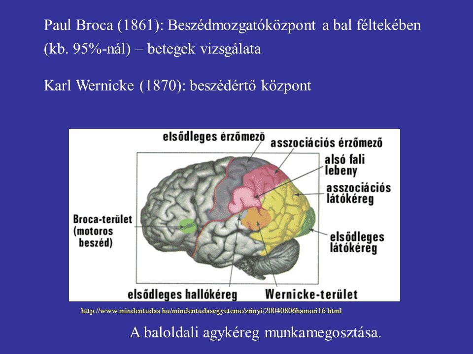 Paul Broca (1861): Beszédmozgatóközpont a bal féltekében (kb. 95%-nál) – betegek vizsgálata Karl Wernicke (1870): beszédértő központ A baloldali agyké