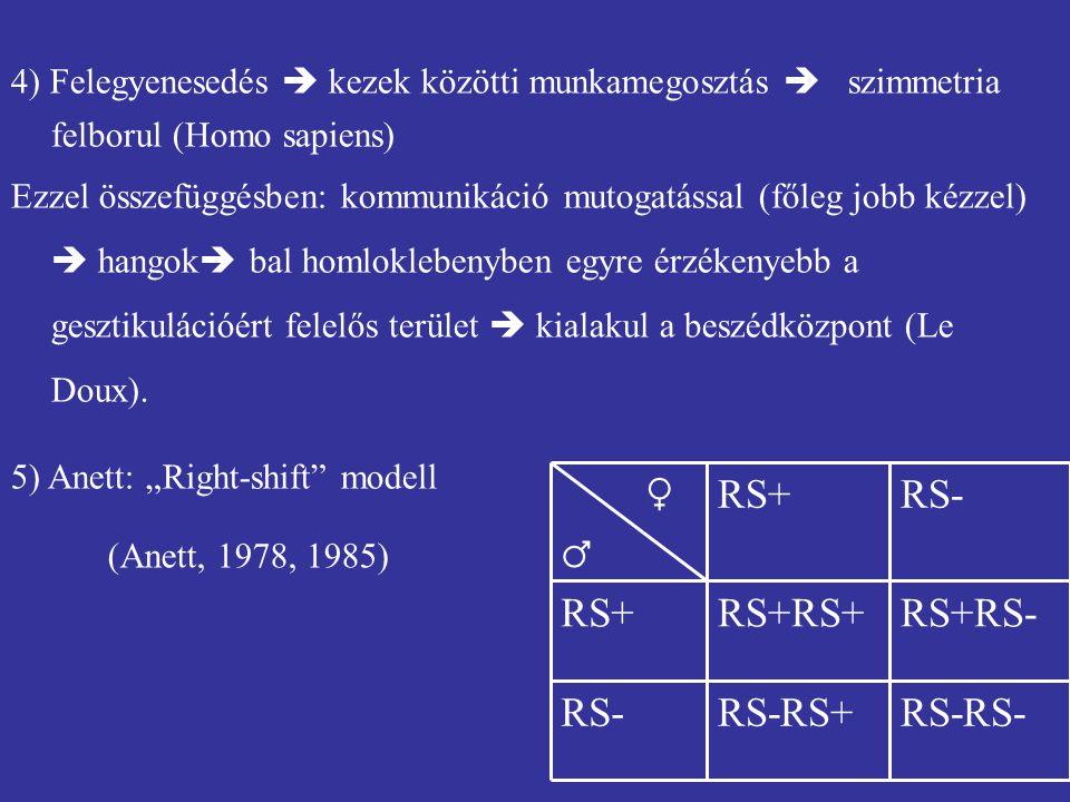 4) Felegyenesedés  kezek közötti munkamegosztás  szimmetria felborul (Homo sapiens) Ezzel összefüggésben: kommunikáció mutogatással (főleg jobb kézz