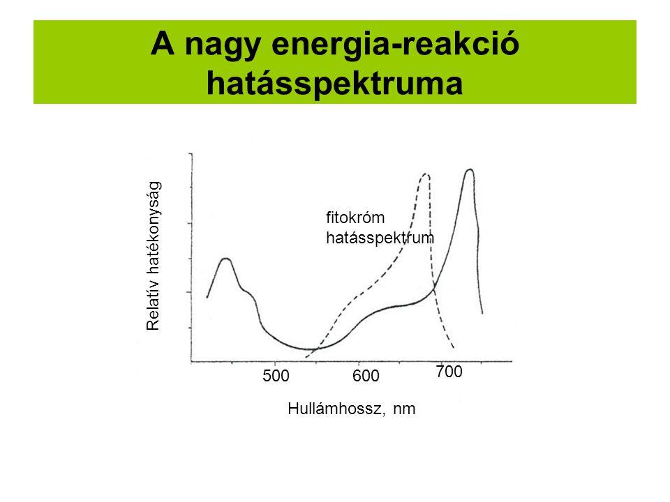 A nagy energia-reakció hatásspektruma fitokróm hatásspektrum 500600 700 Hullámhossz, nm Relatív hatékonyság