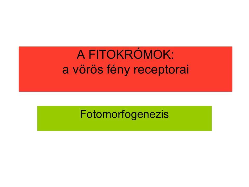 A FITOKRÓMOK: a vörös fény receptorai Fotomorfogenezis