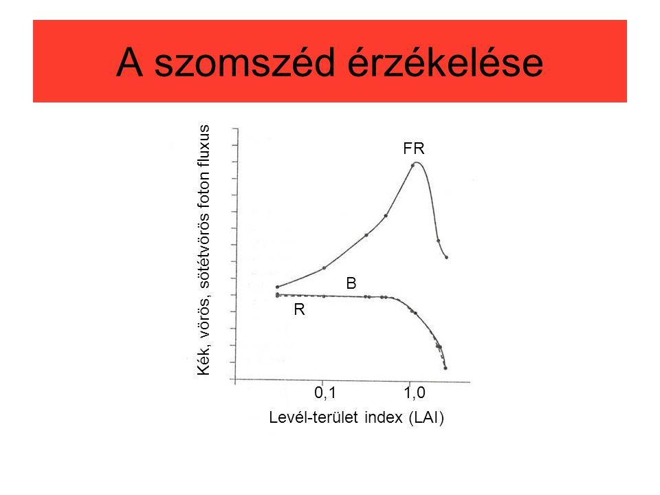 A szomszéd érzékelése Levél-terület index (LAI) 0,11,0 Kék, vörös, sötétvörös foton fluxus FR R B
