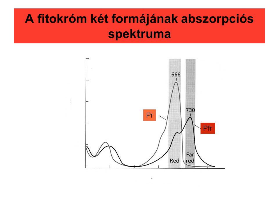 A fitokróm két formájának abszorpciós spektruma Pr Pfr