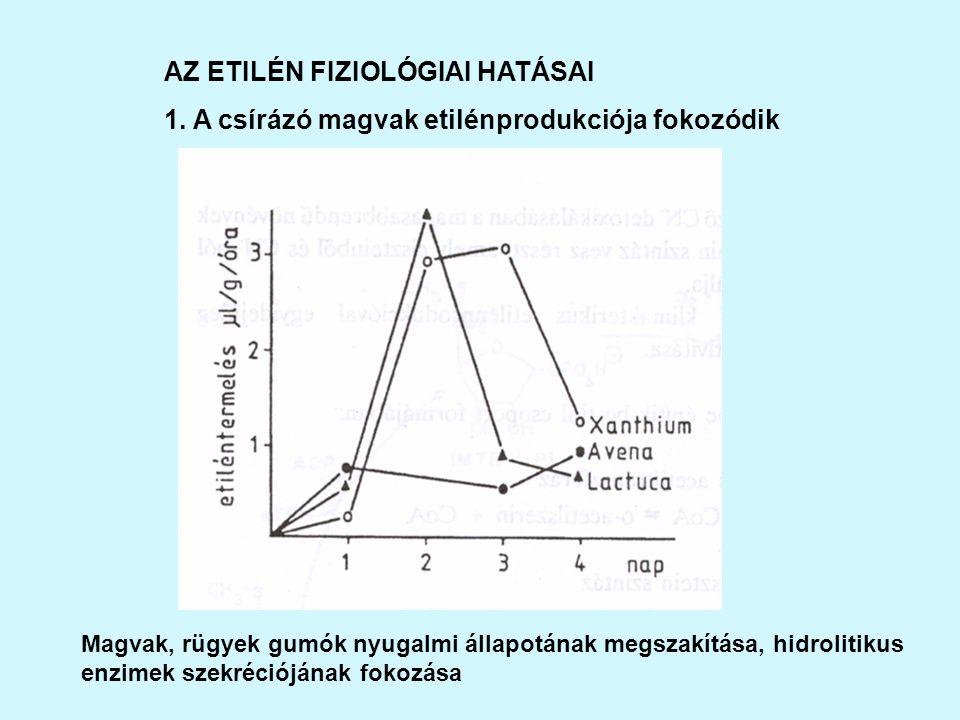 AZ ETILÉN FIZIOLÓGIAI HATÁSAI 1.