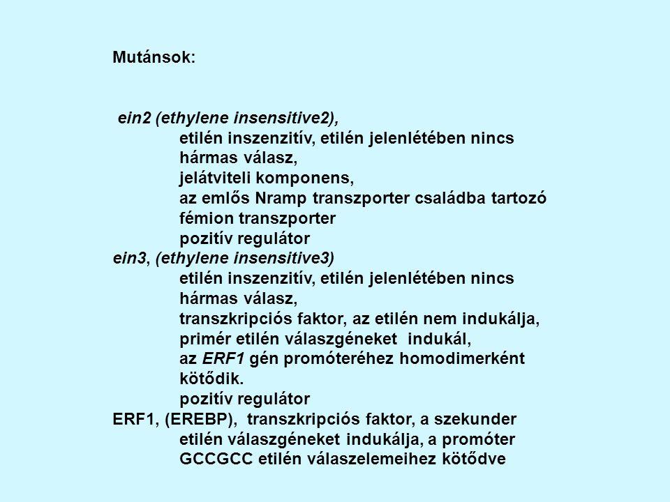 Mutánsok: ein2 (ethylene insensitive2), etilén inszenzitív, etilén jelenlétében nincs hármas válasz, jelátviteli komponens, az emlős Nramp transzporter családba tartozó fémion transzporter pozitív regulátor ein3, (ethylene insensitive3) etilén inszenzitív, etilén jelenlétében nincs hármas válasz, transzkripciós faktor, az etilén nem indukálja, primér etilén válaszgéneket indukál, az ERF1 gén promóteréhez homodimerként kötődik.