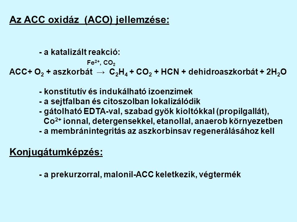 Az ACC oxidáz (ACO) jellemzése: - a katalizált reakció: Fe 2+, CO 2 ACC+ O 2 + aszkorbát → C 2 H 4 + CO 2 + HCN + dehidroaszkorbát + 2H 2 O - konstitutív és indukálható izoenzimek - a sejtfalban és citoszolban lokalizálódik - gátolható EDTA-val, szabad gyök kioltókkal (propilgallát), Co 2+ ionnal, detergensekkel, etanollal, anaerob környezetben - a membránintegritás az aszkorbinsav regenerálásához kell Konjugátumképzés: - a prekurzorral, malonil-ACC keletkezik, végtermék
