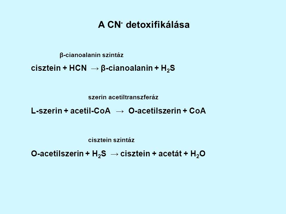 A klimakterikus gyümölcsök az érés folyamán CN – rezisztens légzési maximummal rendelkeznek