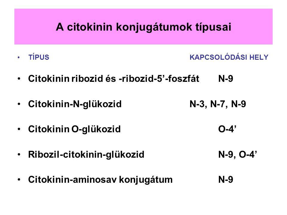 A citokinin konjugátumok típusai TÍPUSKAPCSOLÓDÁSI HELY Citokinin ribozid és -ribozid-5'-foszfátN-9 Citokinin-N-glükozidN-3, N-7, N-9 Citokinin O-glük