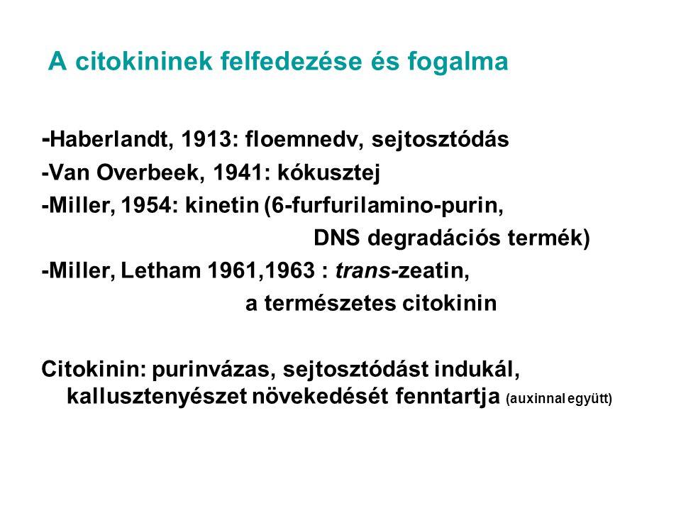 A citokininek felfedezése és fogalma - Haberlandt, 1913: floemnedv, sejtosztódás -Van Overbeek, 1941: kókusztej -Miller, 1954: kinetin (6-furfurilamin