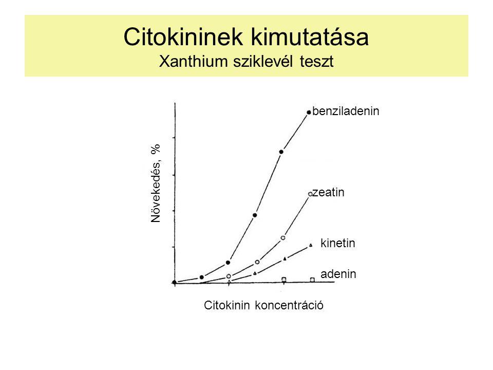 Citokininek kimutatása Xanthium sziklevél teszt Növekedés, % Citokinin koncentráció benziladenin zeatin kinetin adenin