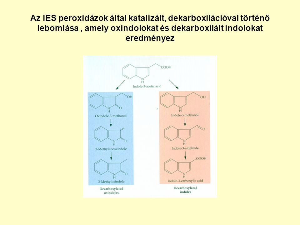 Az IES peroxidázok által katalizált, dekarboxilációval történő lebomlása, amely oxindolokat és dekarboxilált indolokat eredményez