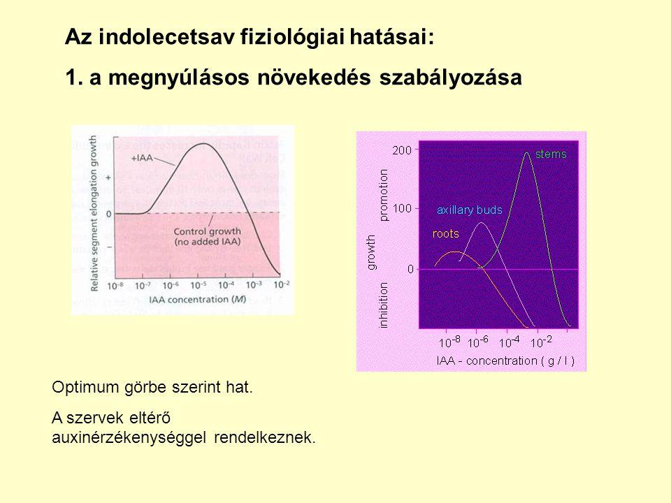 Az indolecetsav fiziológiai hatásai: 1.