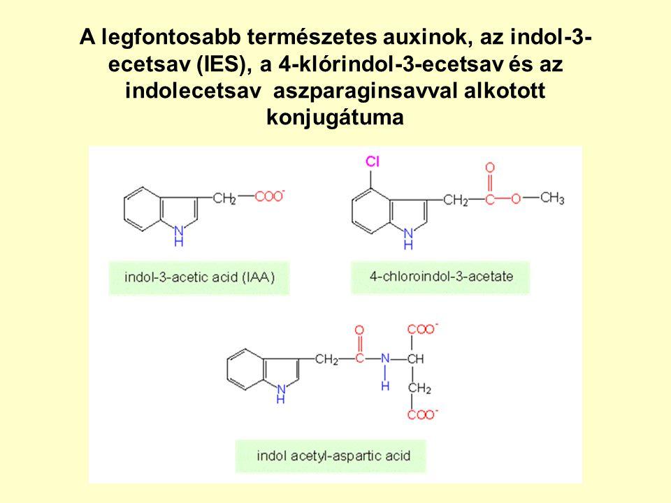 A legfontosabb természetes auxinok, az indol-3- ecetsav (IES), a 4-klórindol-3-ecetsav és az indolecetsav aszparaginsavval alkotott konjugátuma