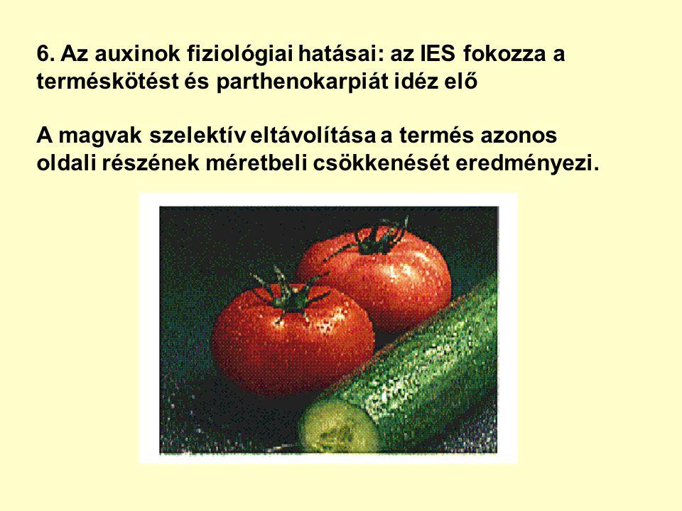 6. Az auxinok fiziológiai hatásai: az IES fokozza a terméskötést és parthenokarpiát idéz elő A magvak szelektív eltávolítása a termés azonos oldali ré