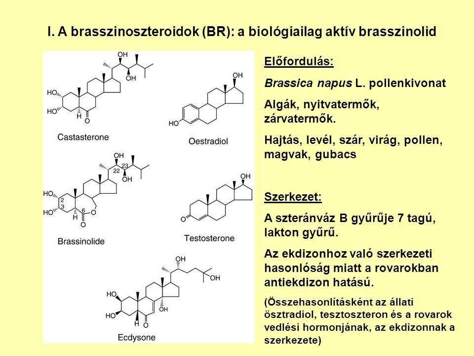 I. A brasszinoszteroidok (BR): a biológiailag aktív brasszinolid Előfordulás: Brassica napus L. pollenkivonat Algák, nyitvatermők, zárvatermők. Hajtás