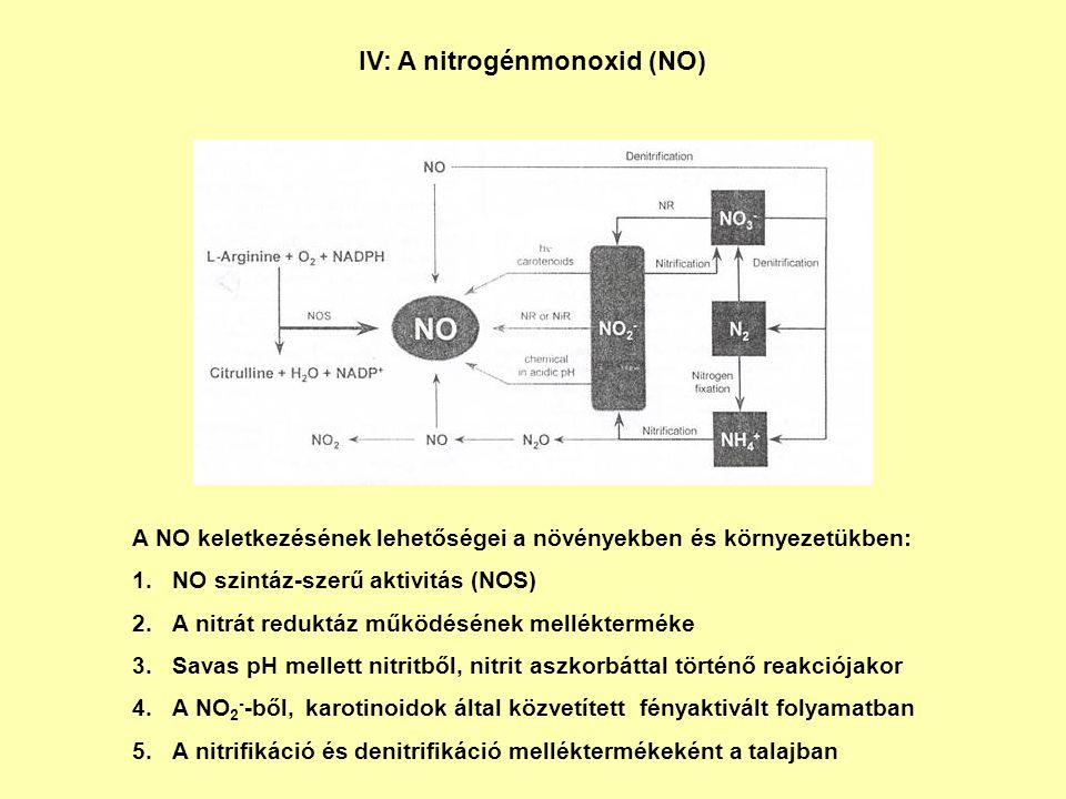 IV: A nitrogénmonoxid (NO) A NO keletkezésének lehetőségei a növényekben és környezetükben: 1.NO szintáz-szerű aktivitás (NOS) 2.A nitrát reduktáz műk