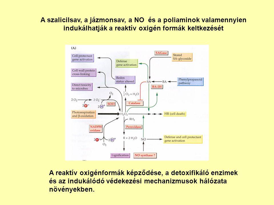 A szalicilsav, a jázmonsav, a NO és a poliaminok valamennyien indukálhatják a reaktív oxigén formák keltkezését A reaktív oxigénformák képződése, a de