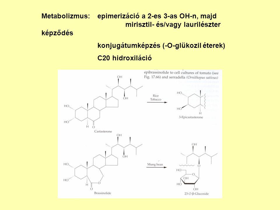 Metabolizmus: epimerizáció a 2-es 3-as OH-n, majd mirisztil- és/vagy laurilészter képződés konjugátumképzés (-O-glükozil éterek) C20 hidroxiláció