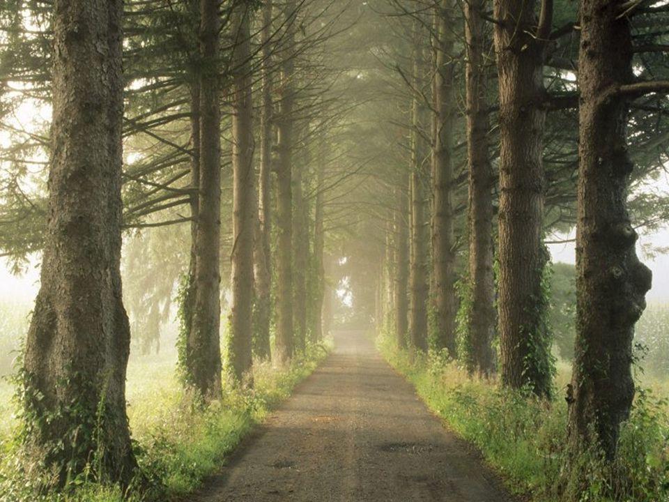 Valahogy mindig félúton vagyok. S néha félek, elfogy alólam az út. Olykor elfog az a furcsa érzés, hiába megyek - minden út körbefut.