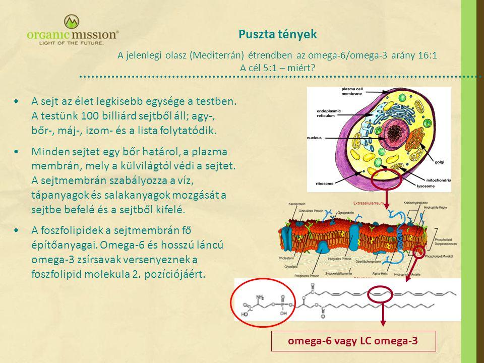 A sejt az élet legkisebb egysége a testben.