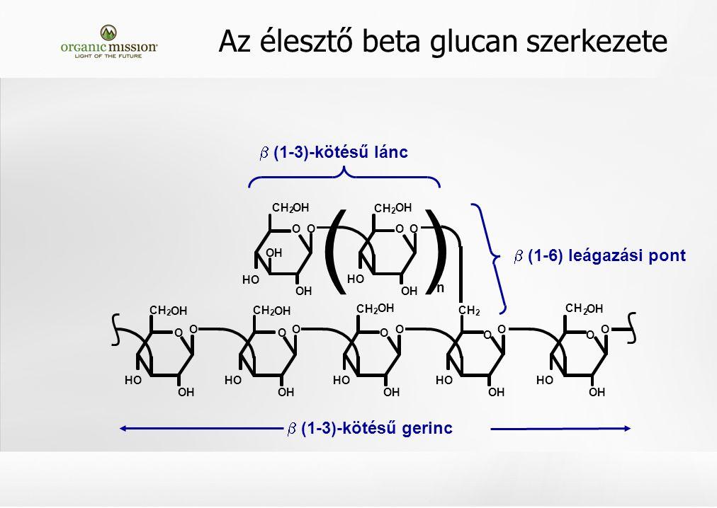 (1-3)-kötésű lánc  (1-6) leágazási pont n OH CH 2 O HO OH O CH 2 OH CH 2 OH O HO O CH 2 OH O HO O CH 2 OH O HO OO OH O CH 2 OH O HO OH O O HO OH O CH 2 OH  (1-3)-kötésű gerinc () Az élesztő beta glucan szerkezete