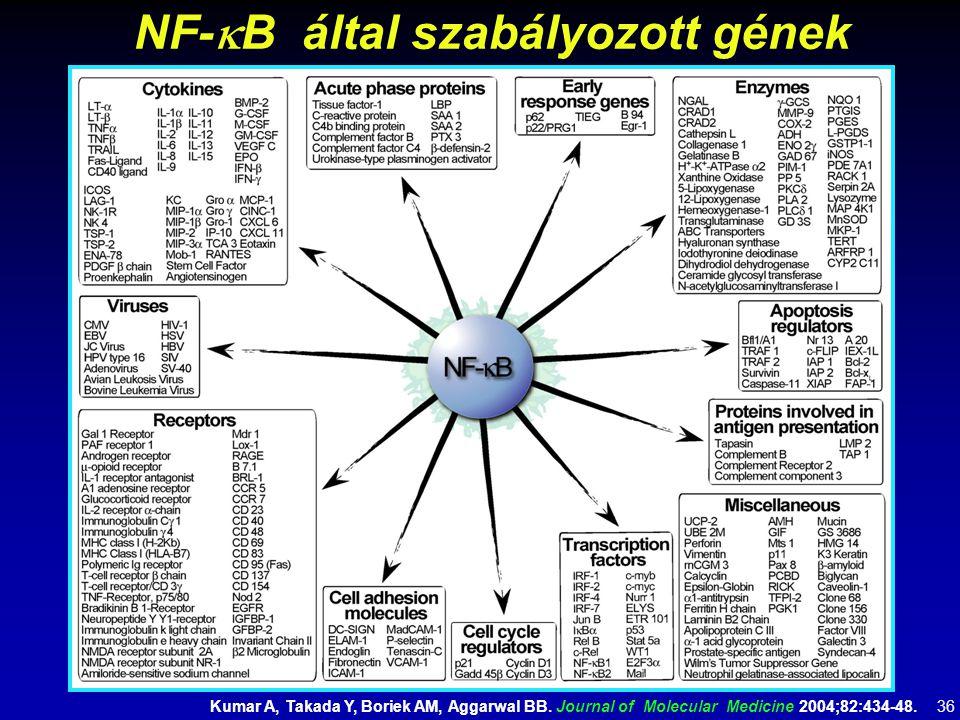 NF-  B által szabályozott gének Kumar A, Takada Y, Boriek AM, Aggarwal BB. Journal of Molecular Medicine 2004;82:434-48. 36