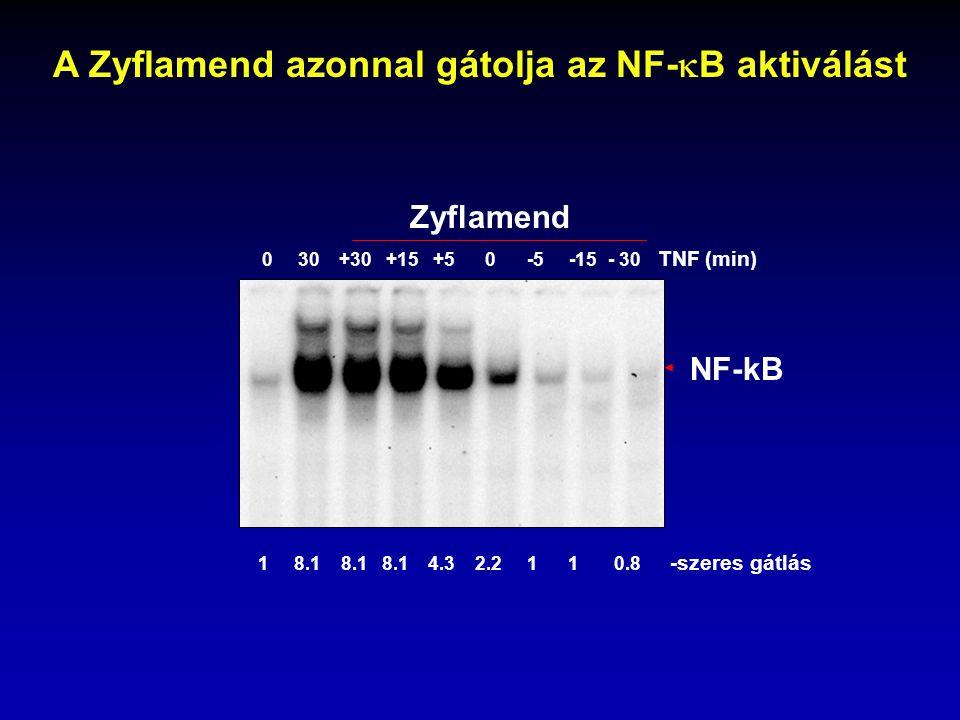 NF-kB 0 30 +30 +15 +5 0 -5 -15 - 30 TNF (min) Zyflamend 1 8.1 8.1 8.1 4.3 2.2 1 1 0.8 -szeres gátlás A Zyflamend azonnal gátolja az NF-  B aktiválást