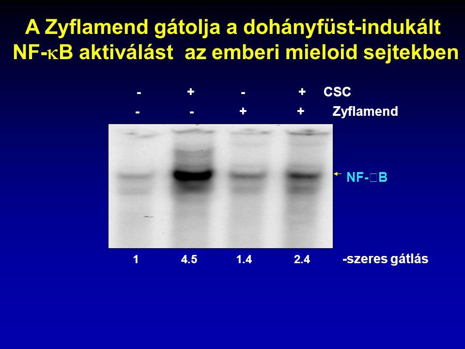 NF-  B - - + + Zyflamend 1 4.5 1.4 2.4 -szeres gátlás - + - + CSC A Zyflamend gátolja a dohányfüst-indukált NF-  B aktiválást az emberi mieloid sejt