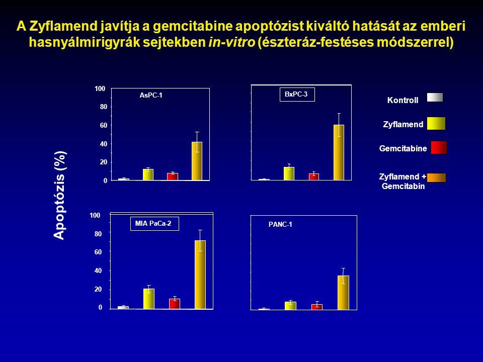 A Zyflamend javítja a gemcitabine apoptózist kiváltó hatását az emberi hasnyálmirigyrák sejtekben in-vitro (észteráz-festéses módszerrel) 0 20 40 60 8