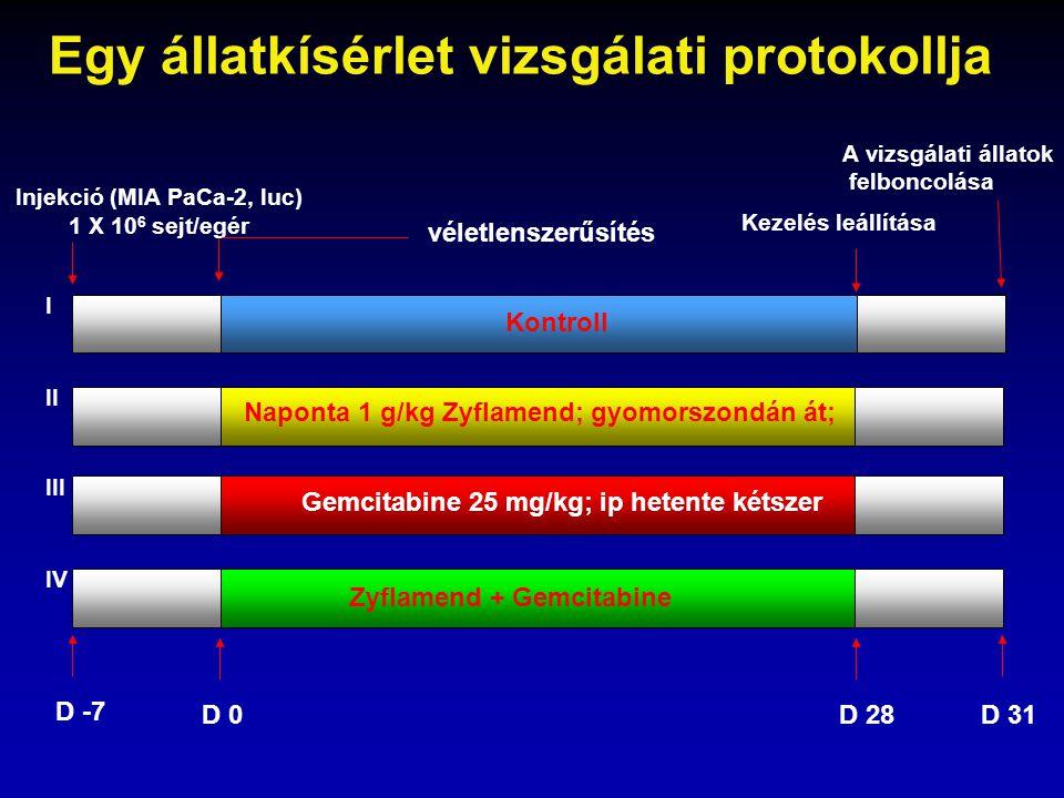 Injekció (MIA PaCa-2, luc) 1 X 10 6 sejt/egér Kontroll Naponta 1 g/kg Zyflamend; gyomorszondán át; Gemcitabine 25 mg/kg; ip hetente kétszer Zyflamend