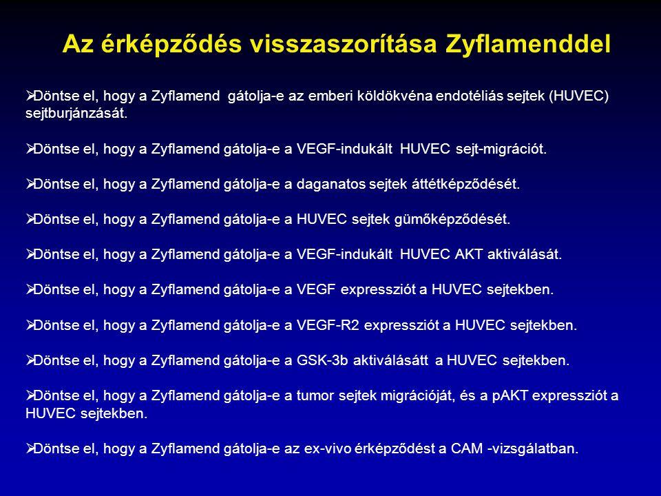  Döntse el, hogy a Zyflamend gátolja-e az emberi köldökvéna endotéliás sejtek (HUVEC) sejtburjánzását.  Döntse el, hogy a Zyflamend gátolja-e a VEGF