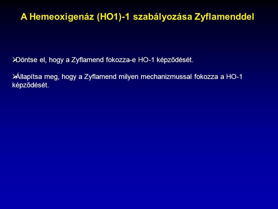  Döntse el, hogy a Zyflamend fokozza-e HO-1 képződését.  Állapítsa meg, hogy a Zyflamend milyen mechanizmussal fokozza a HO-1 képződését. A Hemeoxig