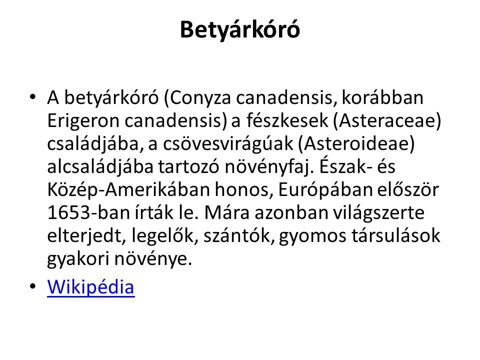 Betyárkóró A betyárkóró (Conyza canadensis, korábban Erigeron canadensis) a fészkesek (Asteraceae) családjába, a csövesvirágúak (Asteroideae) alcsalád