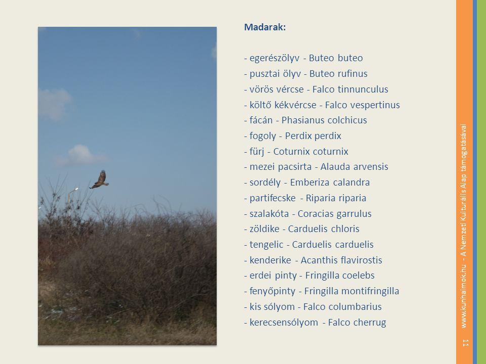 Madarak: - egerészölyv - Buteo buteo - pusztai ölyv - Buteo rufinus - vörös vércse - Falco tinnunculus - költő kékvércse - Falco vespertinus - fácán -