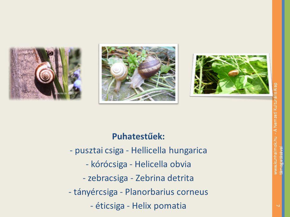 Puhatestűek: - pusztai csiga - Hellicella hungarica - kórócsiga - Helicella obvia - zebracsiga - Zebrina detrita - tányércsiga - Planorbarius corneus