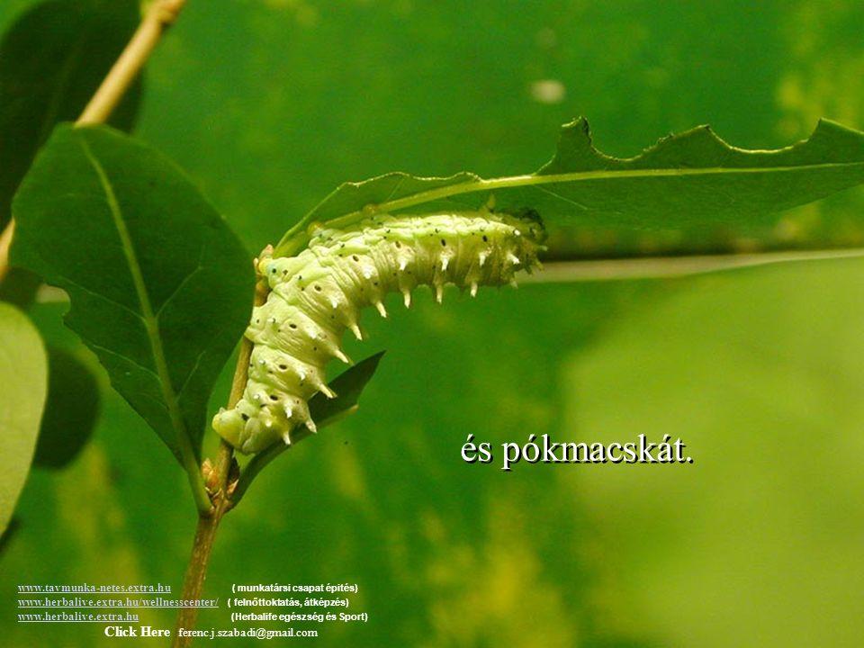 Az Úrtól kaktuszt kapott, www.tavmunka-netes.extra.huwww.tavmunka-netes.extra.hu ( munkatársi csapat épités) www.herbalive.extra.hu/wellnesscenter/ (